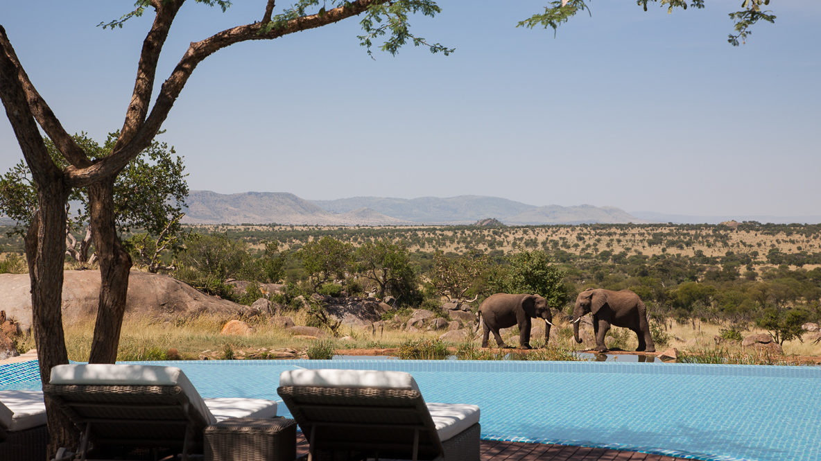 hotels in heaven four seasons safari lodge serengeti accommodation elephants veld view lounger trees bushes sky
