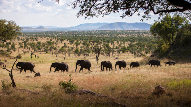 hotels in heaven four seasons safari lodge serengeti outdoors animals elephants savannah flock trees sky mountains
