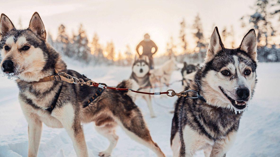 hotels in heaven Kakslauttanen husky safari cute dogs fun adventure adventurous racing sleigh cold snow trees