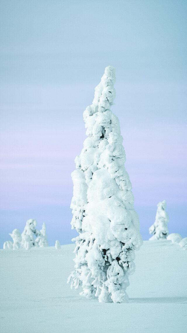 snow tree-kakslauttanen artic resort