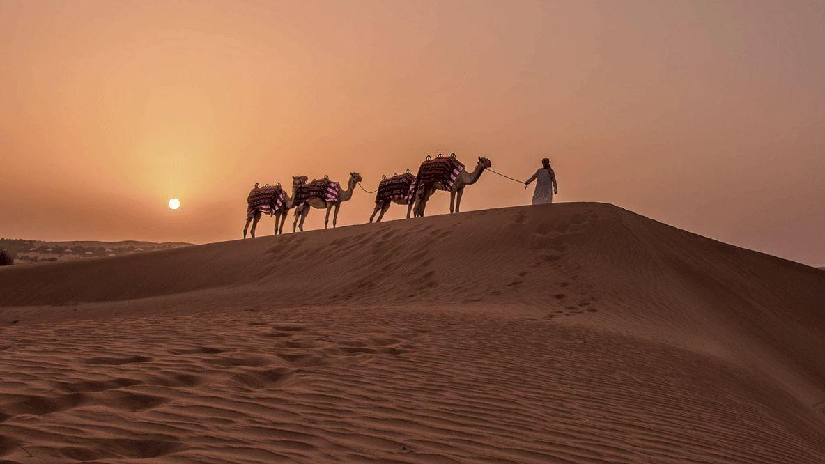 camel riding-al maha desert resort uae