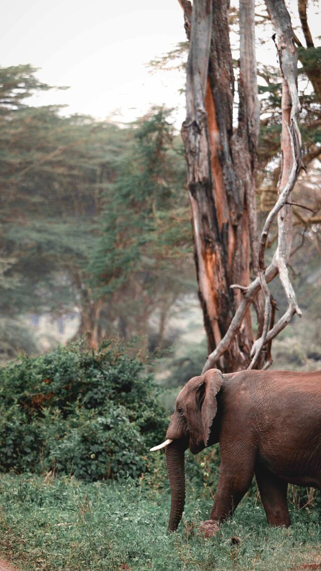 elephant safari-andbeyond ngorongoro crater lodge tanzania