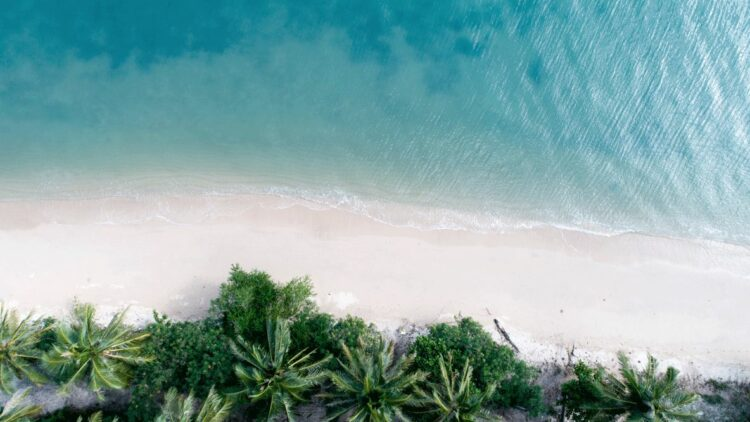 hotels in heaven location private beach palm tree sea palm tree sand luxury nature Thailand Koh Samui island location