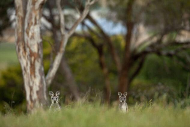 emirates one&only wolgan valley australia-wildlife