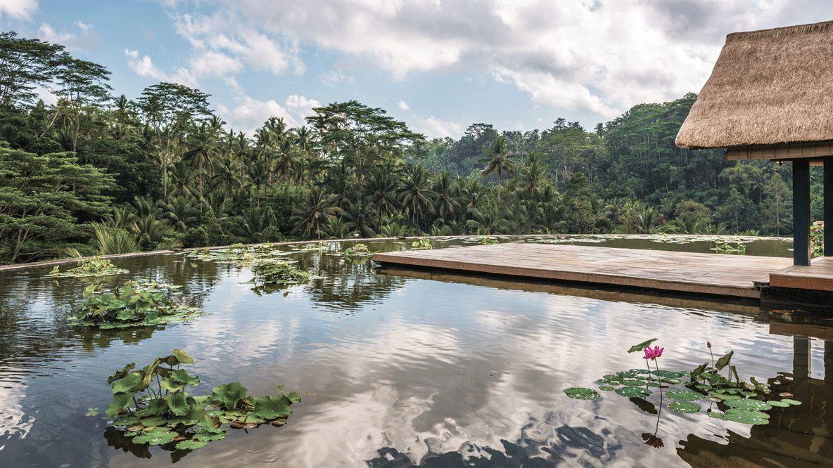 lotus pond hotel-four seasons resort bali at sayan