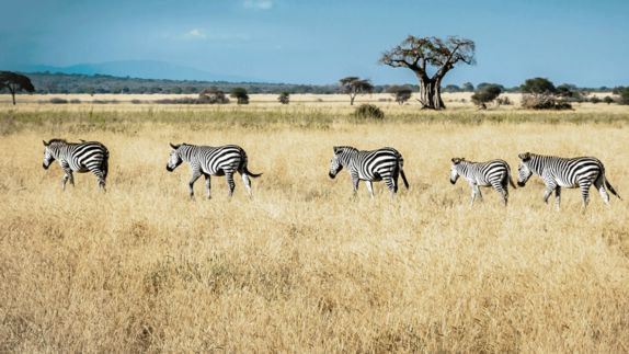 hotels in heaven and beyond and Beyond Ngorongoro Crater Lodge location wildlife tree nature zebra meadow sky Africa