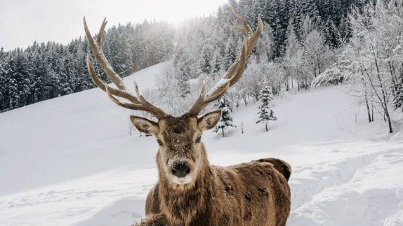 hotels in heaven hotel forsthofgut location deer beautiful tree snow sun fin wild animal antler white