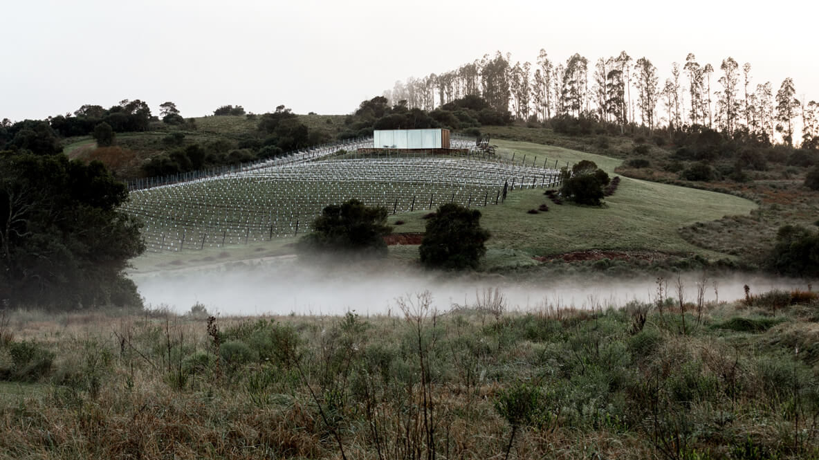 hotels in heaven sacromonte accommodation location foggy early bird morning grass vineyard trees bushes beautiful