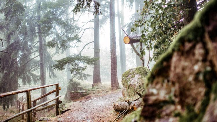 forest path-miramonti italy