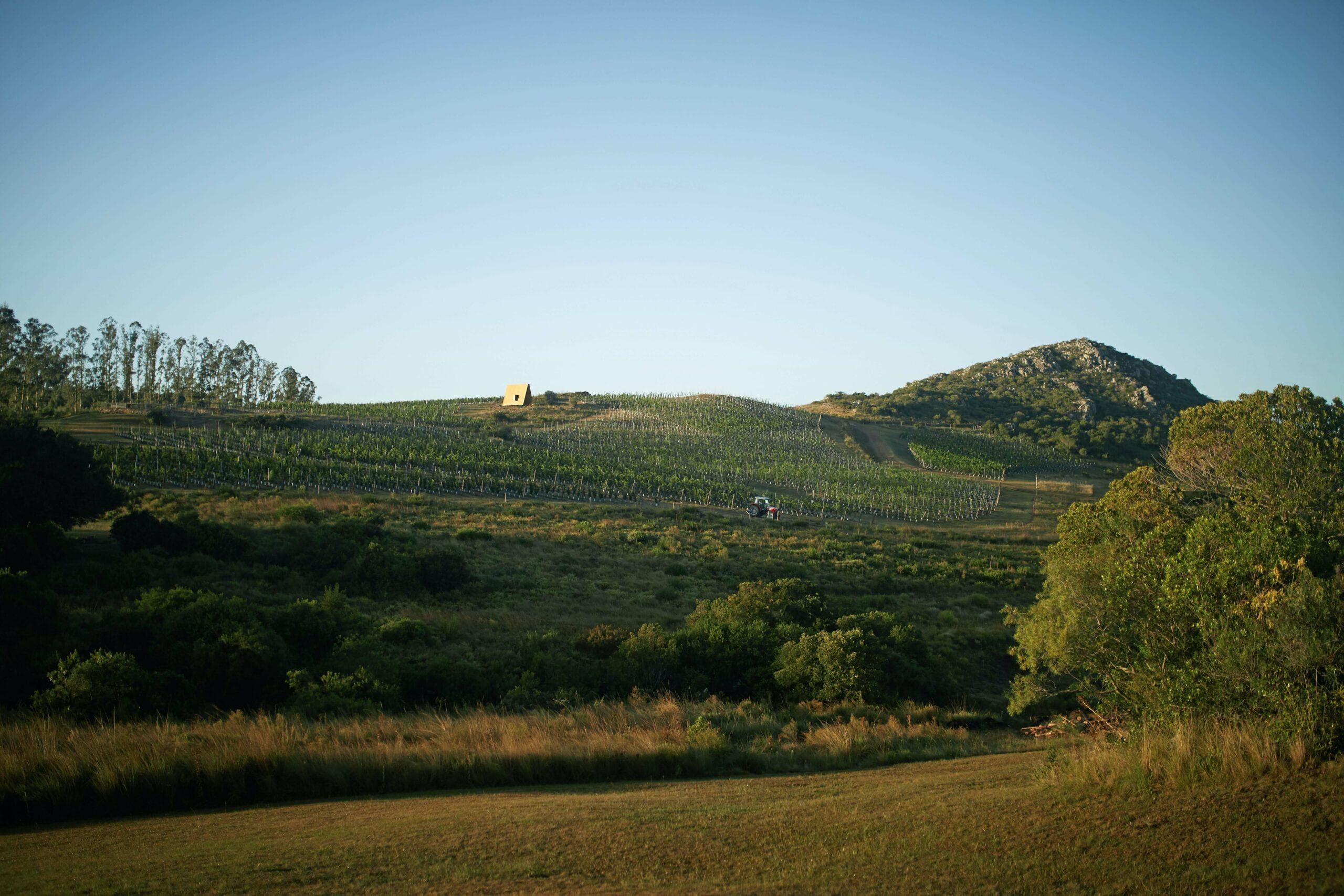 wine yards-sacromonte landscape hotel uruguay