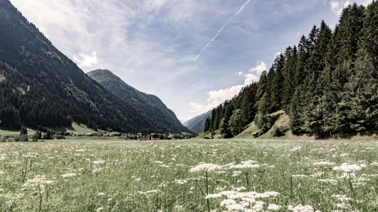 wiesergut-austria-location-nature