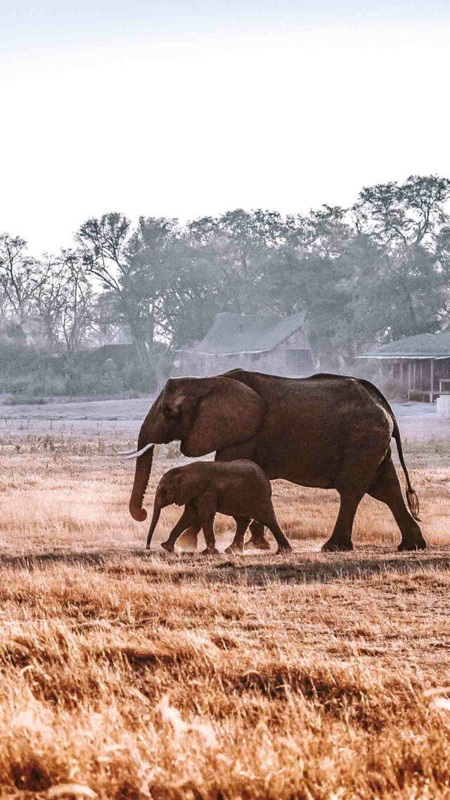 elephant safari luxury hotel-jao camp