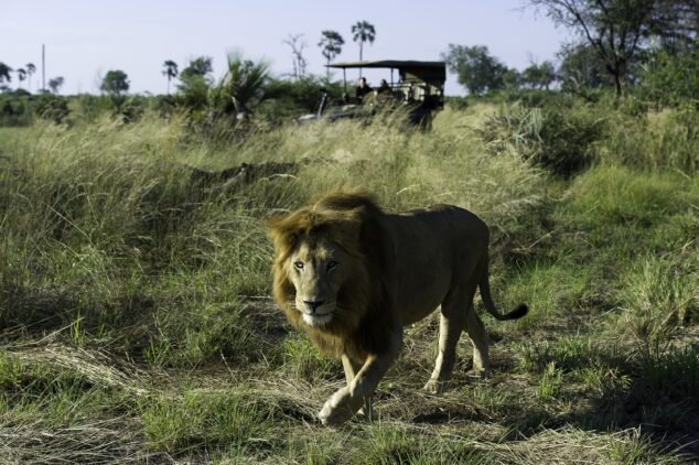 safari tour-jao camp botswana