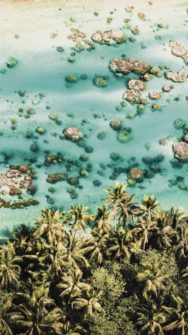 reef south pacific-the brando