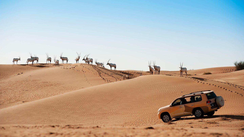 action drive desert-al maha desert resort