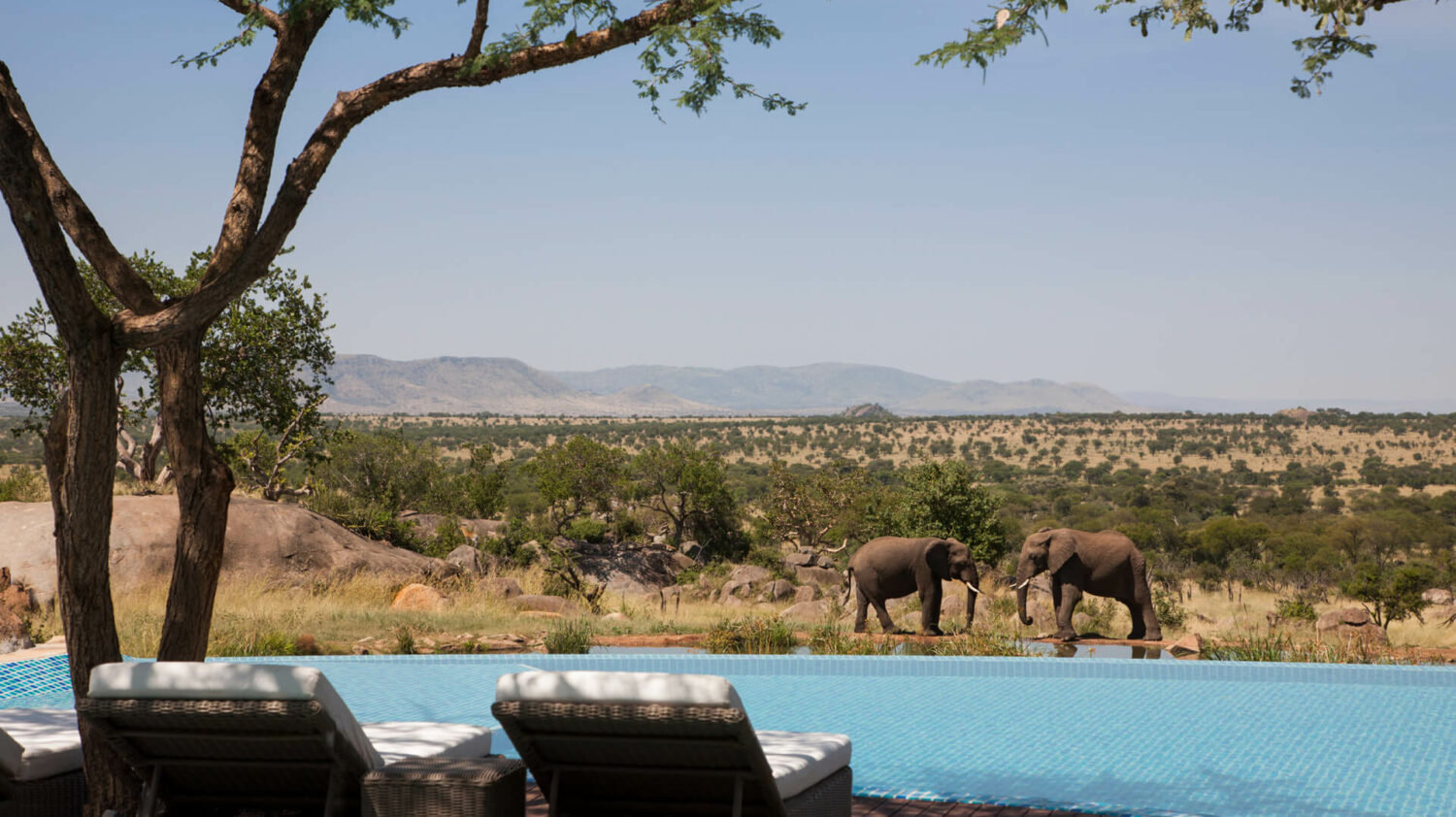 elephant pool view-four seasons safari lodge serengeti