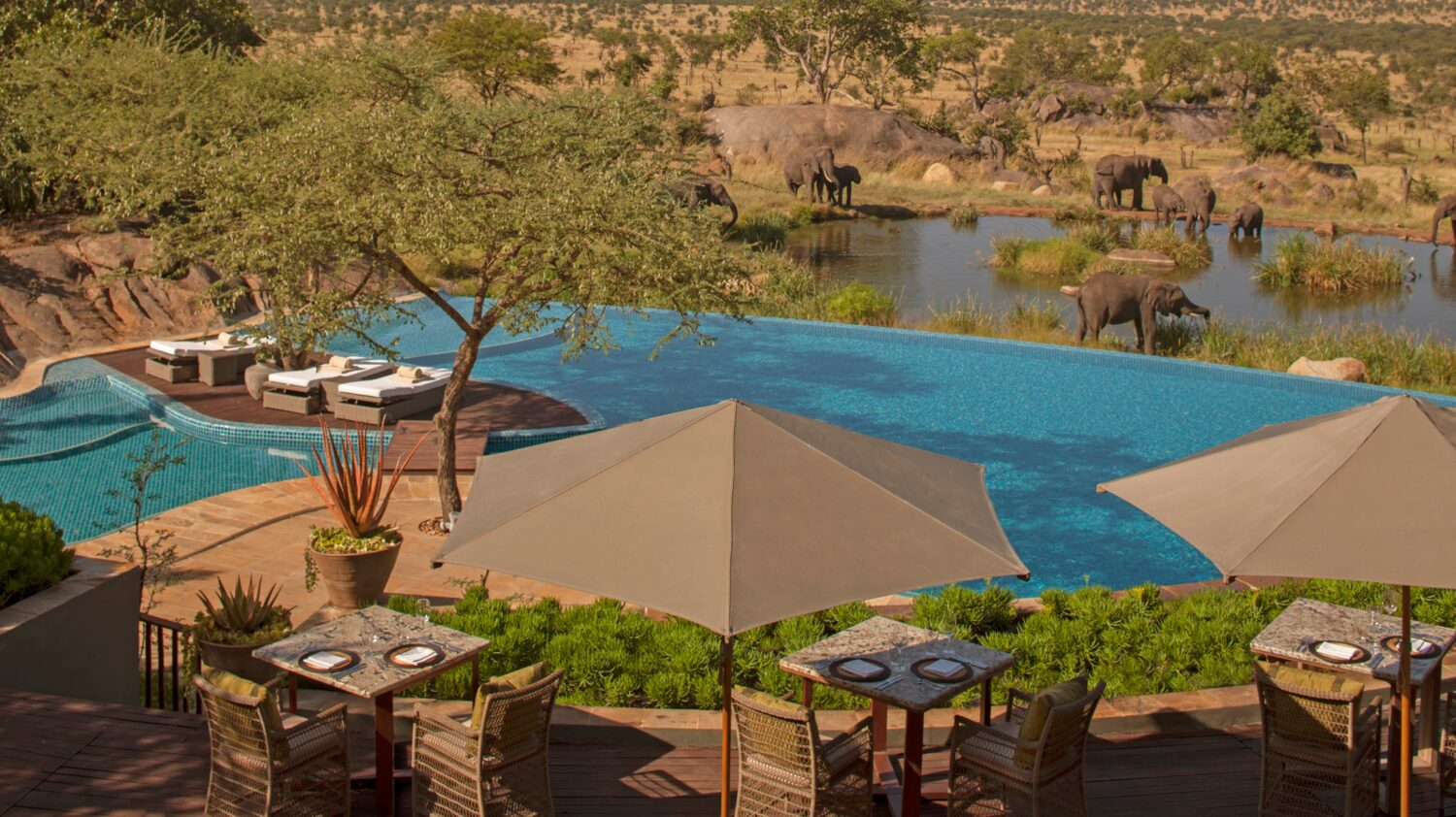 pool area elephants-four seasons safari lodge serengeti