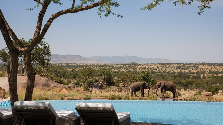 elephant pool view-four seasons safari lodge serengeti