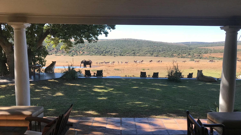 gorah elephant camp south africa-lions