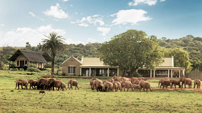 gorah elephant camp south africa-lodge-elephants