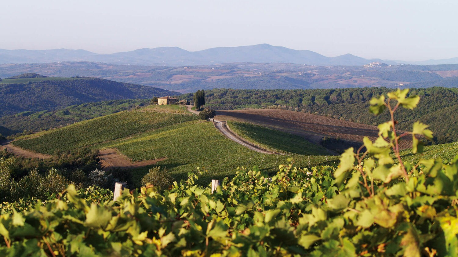 rosewood-castiglion-del-bosco-capanna-vineyards