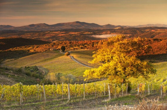 rosewood-castiglion-del-bosco-landscape