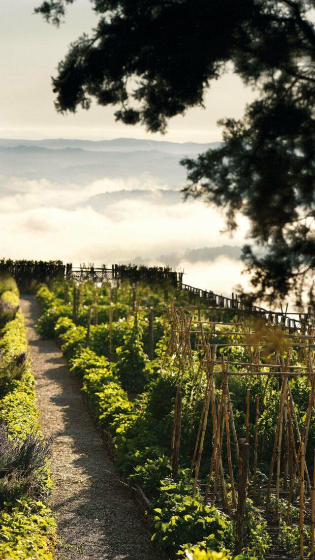 rosewood-castiglion-del-bosco-organic-garden-mobile