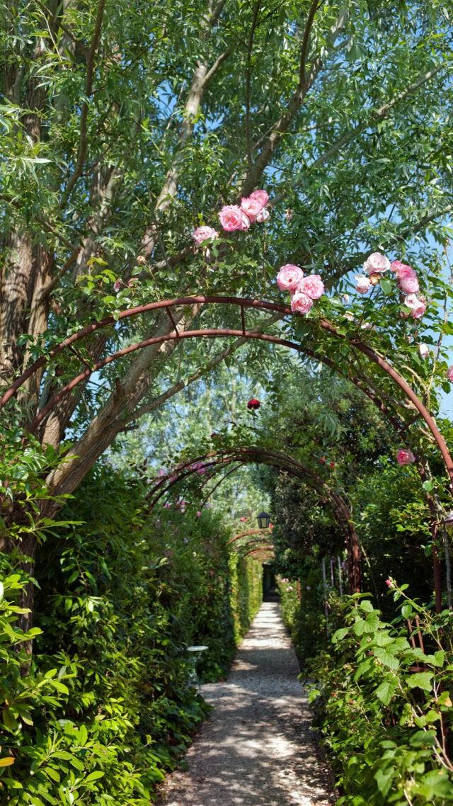 Borgo-Santo-Pietro roses-garden