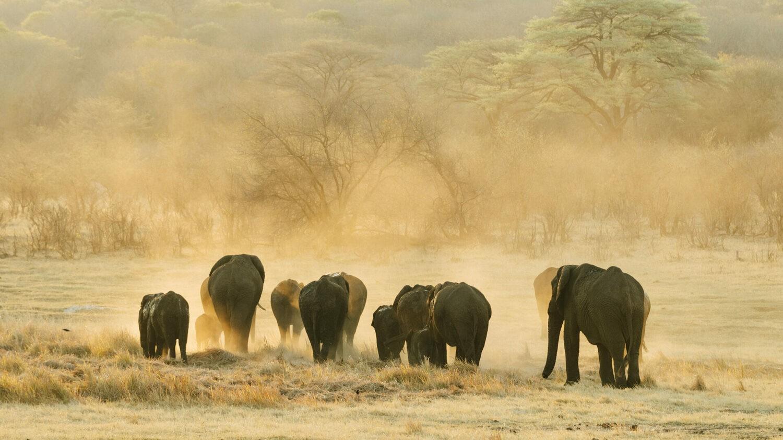 matetsi-victoria-falls-safari-elephant