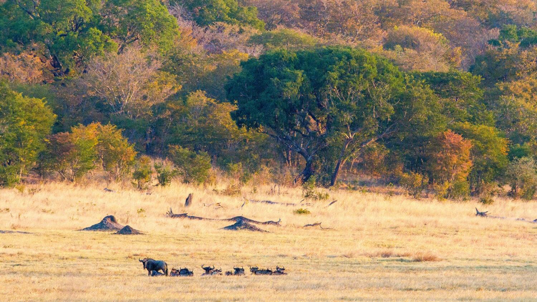 matetsi-victoria-falls-wildlife