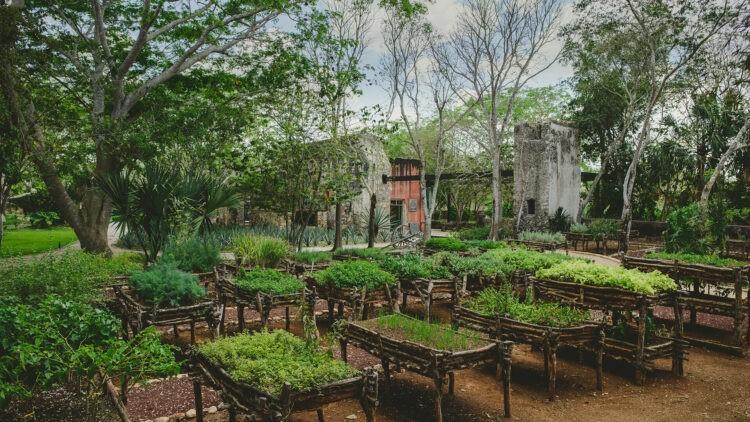 chable-yucatan-plantation