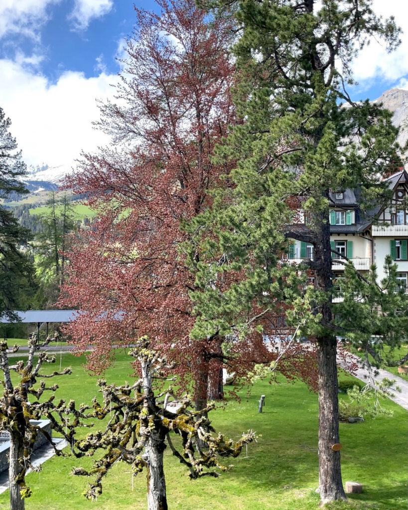 hotels_in_heaven_silvana_villa_waldhaus_flims